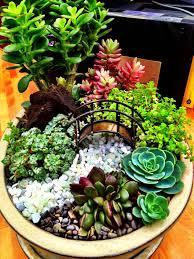 558 Best Succulent Container Arrangements Images On Pinterest Succulent Container Garden Plans
