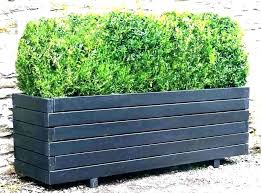 large outdoor potted plants plant containers planters uk l