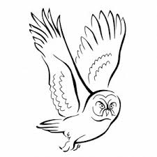 Small Picture robin coloring page hawk with its prey coloring page free