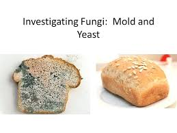 What Cause Bread To Mold Its Just Mold Whats The Worst That Could