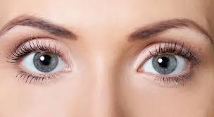 Eyelid Anatomy Eyelid Anatomy