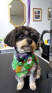 new groomed dog in salon pet groomers in lancaster pa