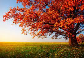 Fall Desktop Wallpapers - Top Free Fall ...