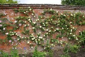 Organic Garden Dreams Mottisfont Abbey  A Rose Loveru0027s Paradise IVWall Climbing Plants Southern California