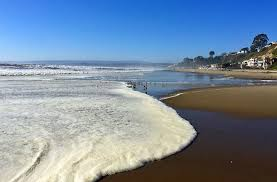 Moss Beach Tide Chart Mystery Of The Red Tide Scientific American Blog Network