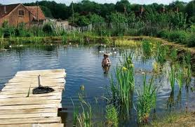 natural looking in ground pools. The Ecological And Health Benefits Of Natural Swimming Pools Looking In Ground