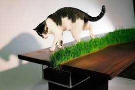 dining table for humans and cats