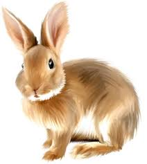 Image result for rabbit clipart  images