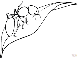 Small Picture Ant Is Walking On a leaf coloring page Free Printable Coloring Pages