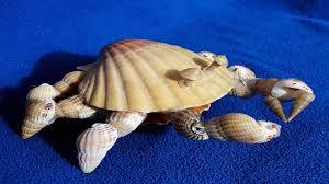 Shell Pet