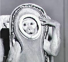 Первая <b>обезьяна</b> в космосе: как это было | Русская семерка