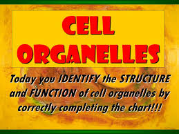 Cell Organelles Structure Function Chart Cell Organelles Today You Identify The Structure And
