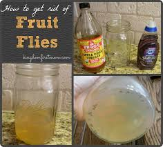 erstaunlich how to get rid of flies glamour s fruit outdoors