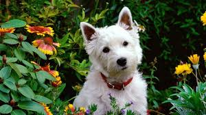 17 safe plants for dogs you can add to almost any garden right now