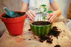 indoor apartment gardening. Plain Apartment Indoor Gardening Intended Apartment Gardening G