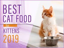 Best Kitten Food 2019