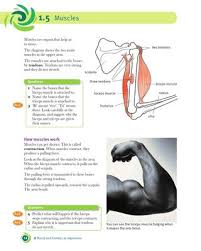 The triceps are a much stronger muscle than the biceps. Cambridge Checkpoint Science Coursebook 7 By Cambridge University Press Education Issuu