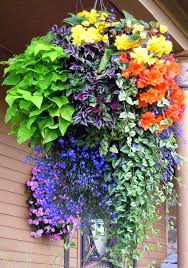 Small Picture Best 25 Hanging flower pots ideas on Pinterest Potted plants