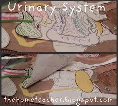 system essay urinary system essay