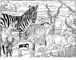 Immagini Da Colorare Di Animali Della Savana
