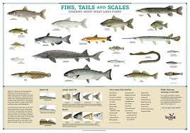 Pin By Monique Gallentine On Foods Fish Chart Fish Types