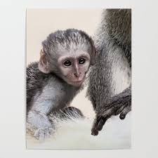 New Born Baby Monkey Poster By Laureenr
