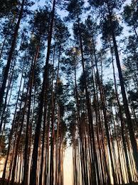 ipad pro wallpaper forest
