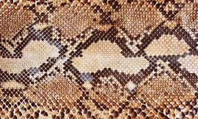 Snake Skin Pattern Awesome Snake Skin Pattern Background Stock Photo Picture And Royalty Free