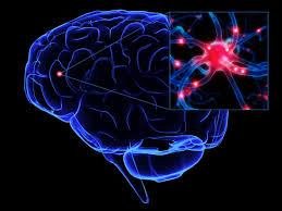 Znalezione obrazy dla zapytania neuron