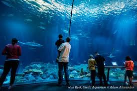 Shedd Aquarium Will Call Bob Evans Military Discount
