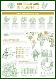 Salad Chart Salad Greens Infographic Template Leaf Vegetable Health Benefits
