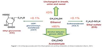Etg Levels Chart Assessment Of Alcohol Exposure Testing For Ethylglucuronide