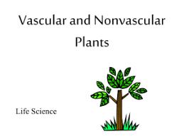 Venn Diagram Of Vascular And Nonvascular Plants Plants