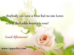 Good Afternoon Love Quotes Gorgeous Download Good Afternoon Love Quotes Ryancowan Quotes