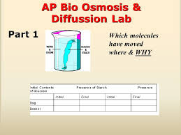 the scaffolding process example iuml uml ap bio essay on osmosis 2 ap bio osmosis diffussion lab which molecules have moved where why part 1