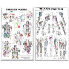 Free Trigger Point Chart Trigger Points I And Ii Laminated Chart Posters Buy Online