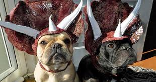 Turn Your Dog Into A <b>Dinosaur</b> With This <b>Triceratops Costume</b> ...