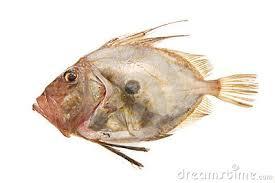 Target doryやjohn doryと言うと、マトウダイになります。 gobyはハゼ科の魚ですね。 gobyと言うと、 ハゼとなります。 ハゼ科の魚を総称して、そう呼んでいるのだと思います。 日本名は、解りません。 海鲂鱼 第1页 一起扣扣ç½'