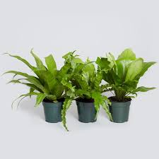 21 best pet friendly plants images on houseplants throughout are air toxic to cats ideas 7