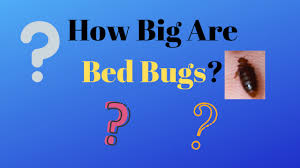 Size Of Bed Bugs Chart How Big Are Bed Bugs Pictures And Size Chart Get Rid Bed Bugs