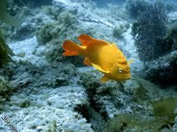 أكبر تجميع لأجمل صور من اعماق البحار (سبحان الله الخالق العظيم) Images?q=tbn:ANd9GcQH131r6j0qRU_mQaTDqr0UAGjjYBZ_4_iUjS4CyzKiyoJ2wQ1qvg