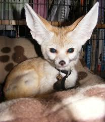 46 best inari fox dolls inari fox flashman fo photos