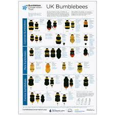 Bee Identification Chart Uk Uk Bumblebee Poster