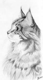 realistic cat drawing in pencil. Exellent Pencil Heilige Birmaan U0026amp Maine Coon  Cat Different Main Cat Breeds At Throughout Realistic Drawing In Pencil D