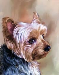dog portraits bella