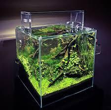 ada cube garden 30cm 12 x12 x12 aquarium garden