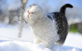 Winter Cat HD desktop wallpaper ...