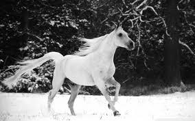 running horses black and white. Fine White Wide  Intended Running Horses Black And White E
