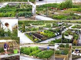 Small Picture Pitt Meadows British Columbia Community Garden City Farmer News