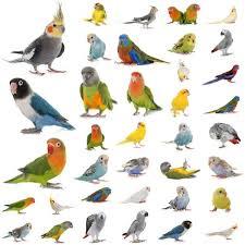 Hindi Birds Name Chart Top 100 Popular Bird Names Male Female Birds